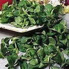 Corn Salad Large Leaved Seeds
