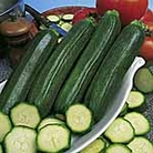 Courgette F1 Defender Seeds