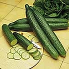 Cucumber Seeds - Telegraph Improved