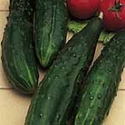 Cucumber F1 Burpless Tasty Green Seeds