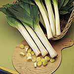 Leek Seeds - Musselburgh