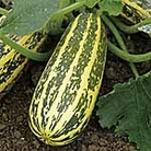 Marrow F1 Tiger Cross Seeds
