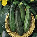 Courgette F1 Green Bush Seeds