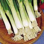 Onion (Salad) Shimonita Seed