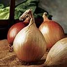 Onion Ailsa Craig Seed