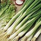 Onion (Salad) White Lisbon - Winter Hardy Seeds