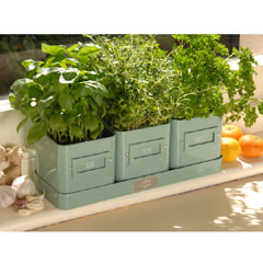 Burgon and Ball Herb Pots In A Tray