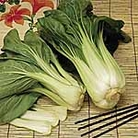 Pak Choi Seeds