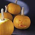 Pumpkin F1 Becky Seeds