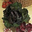 Radicchio Palla Rossa Bella Seeds