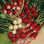 Radish Mixed Seeds