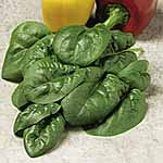 Spinach Bloomsdale Seeds