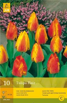 Tulip 'Flair'