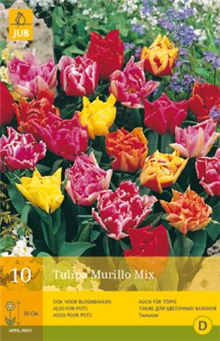 Tulip - Double Early Mix