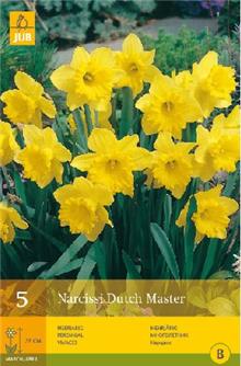 Daffodil - Narcissus 'Dutch Master'