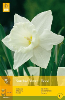 Daffodil - Narcissus 'Mount Hood'
