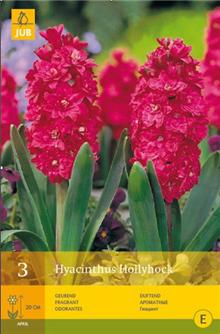 Hyacinth 'Hollyhock'