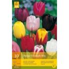 Tulip 'Triumph Mix'