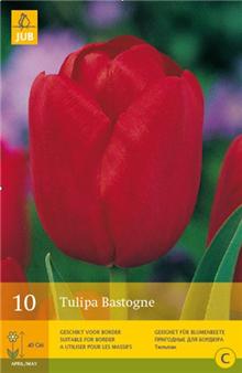 Tulip 'Bastogne'