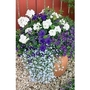 Blue Container Plant Collection