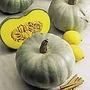 Squash F1 Crown Prince Seeds