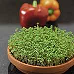 Speedy Veg Seed - Cress Curled