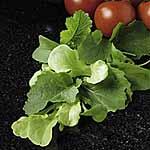 Speedy Veg Seed - Leaf Salad Italian Mix