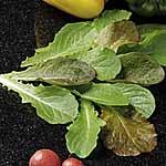 Speedy Veg Seed - Leaf Salad Cos Lettuce Mix