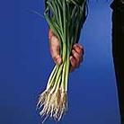 Speedy Veg Seed - Leek Atal