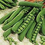 Pea Early Onward Seeds