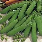 Pea Little Marvel Seeds