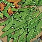 Pea Oregon Sugar Pod Seeds