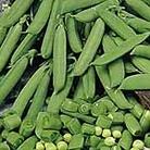 Pea Sugarbon Seeds