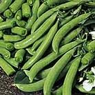 Pea Sugar Snap Delikett Seeds