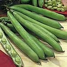 Bean (Broad Bean) Seeds - Aquadulce Claudia