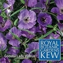Kew : Godetia Lady In Blue 1 packet (200 seeds)