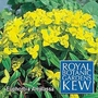 Kew : Euphorbia Amjilassa 1 packet (30 seeds)
