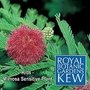 Kew For Kids : Mimosa Sensitive Plant 1 packet (100 seeds)