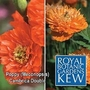 Kew : Poppy (Meconopsis) Cambrica Double Mixed 1 packet (50 seeds)