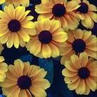 Rudbeckia Toto Seeds