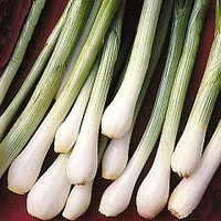 Onion : Bunching/Spring : White Lisbon 1 packet (650 seeds)