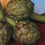 Artichoke : Globe : Green Globe Improved F1 1 packet (40 seeds)