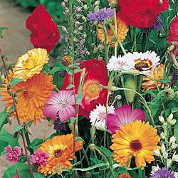 Butterflies Seed Mixture