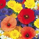 Wild Flower Seed Mixture