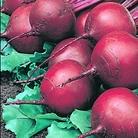 Beetroot Kestrel Seeds