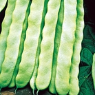 French Bean Hunter Seeds - Climbing
