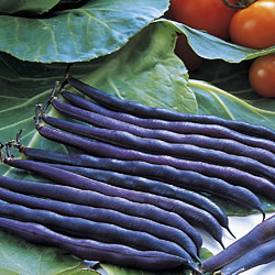 French Bean Purple Queen Seeds