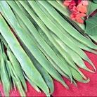 Runner Bean Polestar Seeds