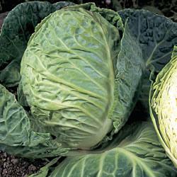 Cabbage Spring Hero Seeds (Spring)