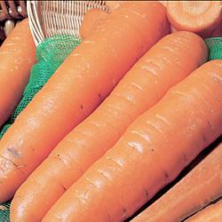 Carrot Autumn King Seeds